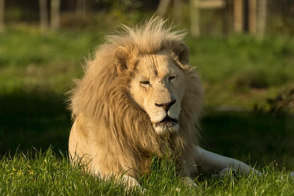 Drakenstein Lion Park