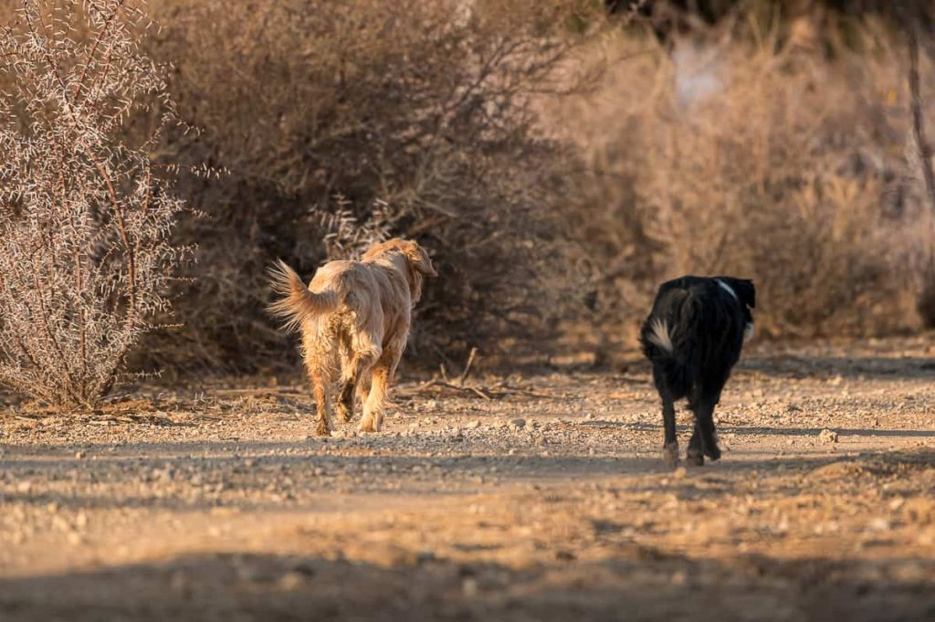 Farm Nutupsdrift in Namibia