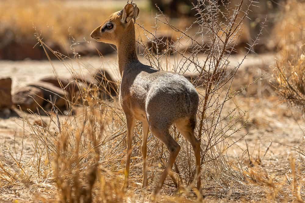 Erindi Private Game Reserve