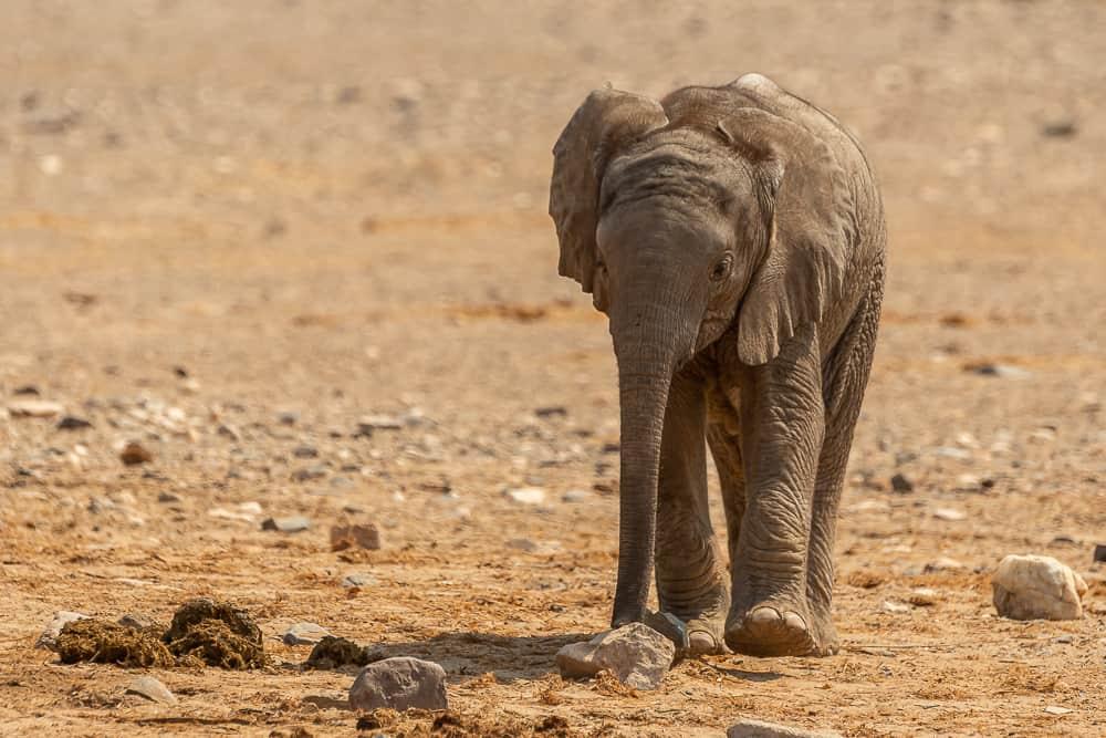 Baby-Elefant im Hoanib