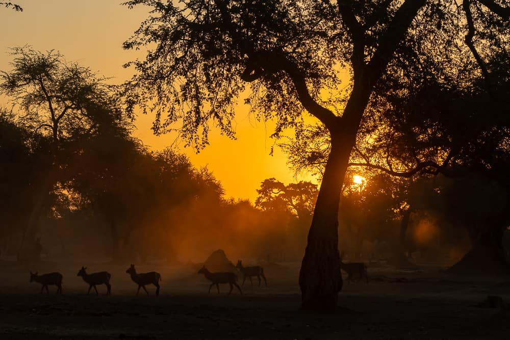 Mana Pools in Zimbabwe