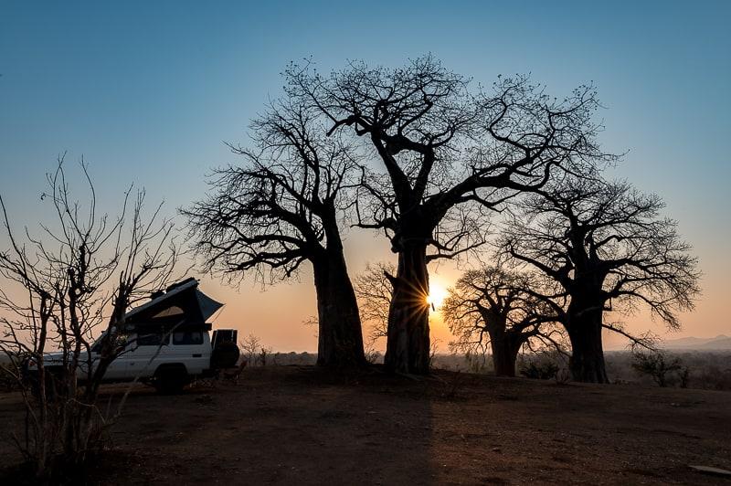 Chitake Baobab