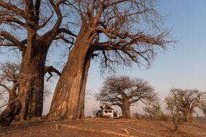 Chitake Baobab Campsite