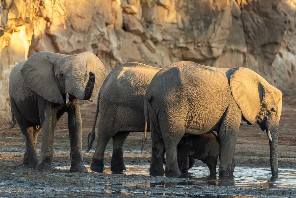 Elefanten in Chitake