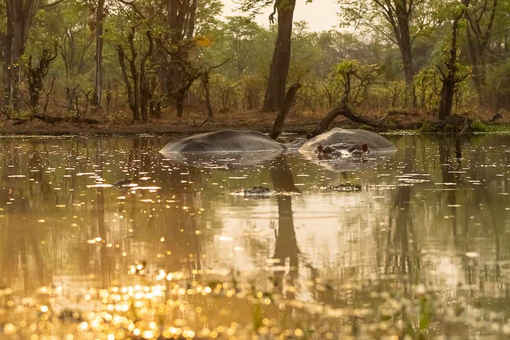 Waterhole Wildlife Camp