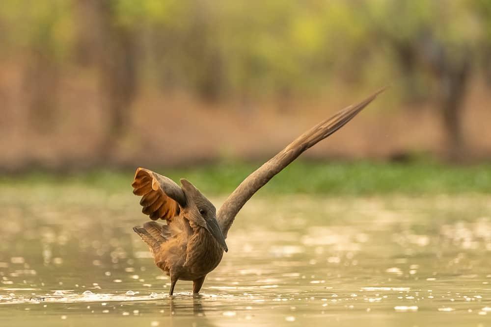 Birdlife at the waterhole