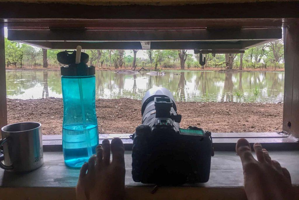 Hide am Wasserloch