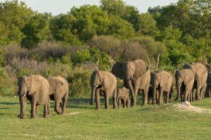 Elefanten im Hwange