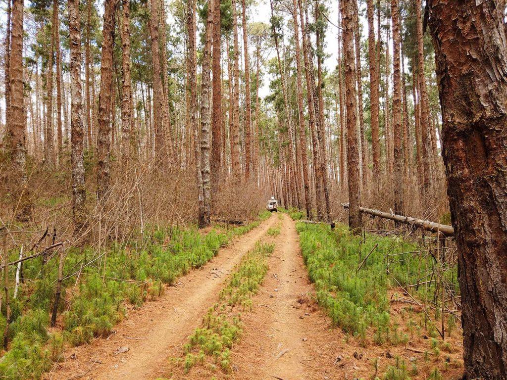 Nyika Nationalpark