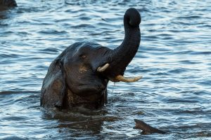 Elefanten im Krüger