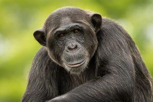 Chimp Eden in Nelspruit