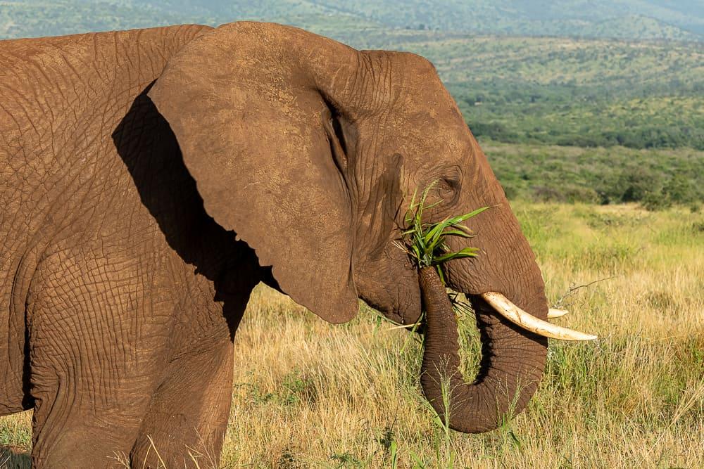Elefanten in Zimanga