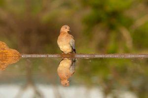 Bird-Hide at Zimanga