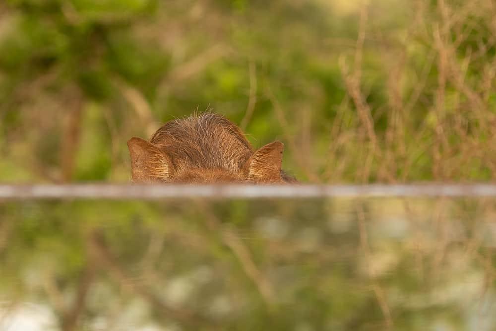 Bird-Hide in Zimanga
