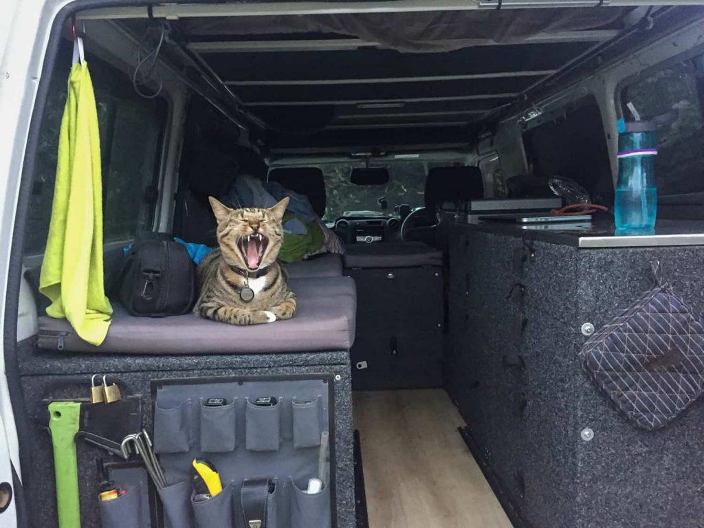 Katze im Landcruiser