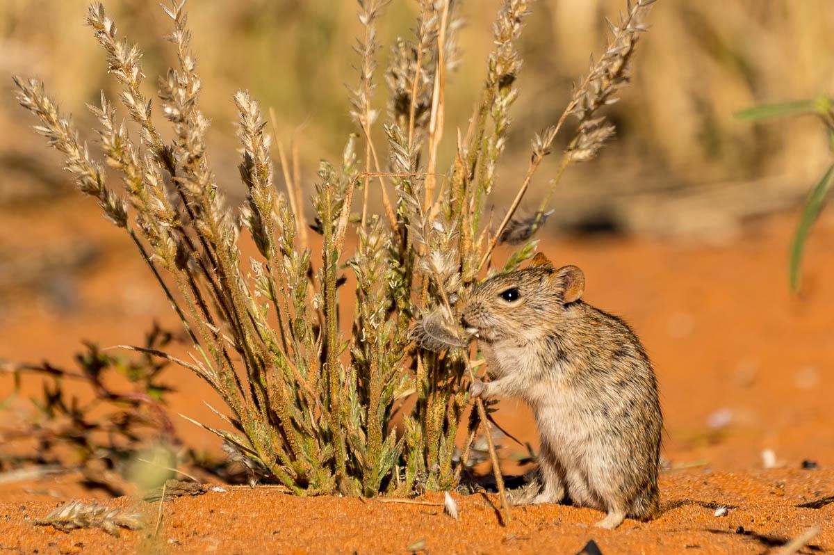 Mäuse im KTP